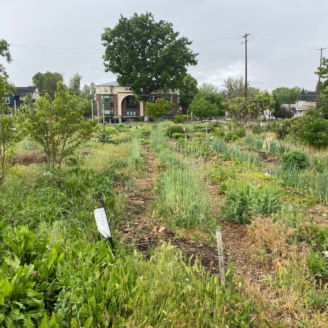 The garden after a spring rain May 14th, 2020